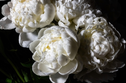 Peonies-29-06-2018-7036-small